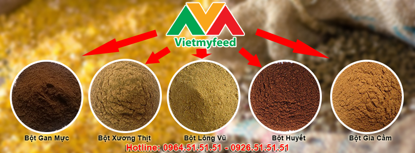 Vietmyfeed phân phối thức ăn gia súc nhập khẩu chính hãng